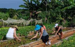 Как найти работу на Кубе?